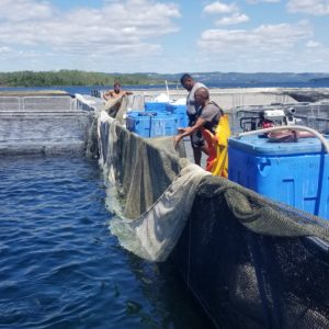 WABUNO CHANNEL FISH FARMS