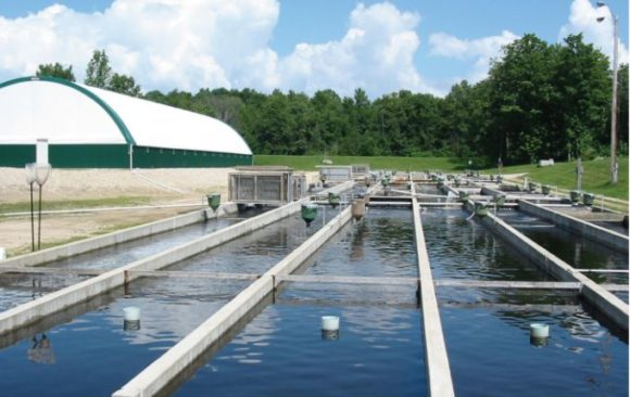 Aquaculture Legislation in Ontario Fact Sheet