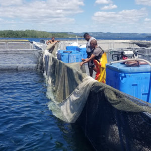 Statement: OAA Supports Regulated Growth of Ontario's Aquaculture Industry