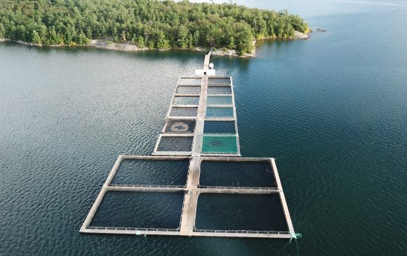 Why you may not need to worry about Ontario farmed fish after all [Media]