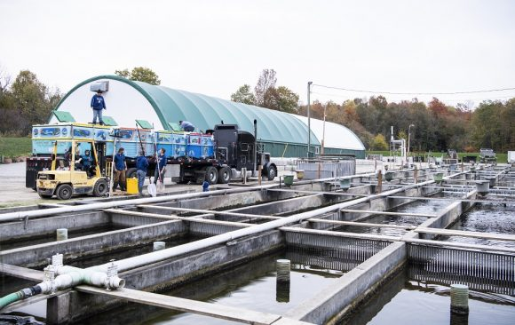 Ontario aquaculture industry's comments on federal Aquaculture Act