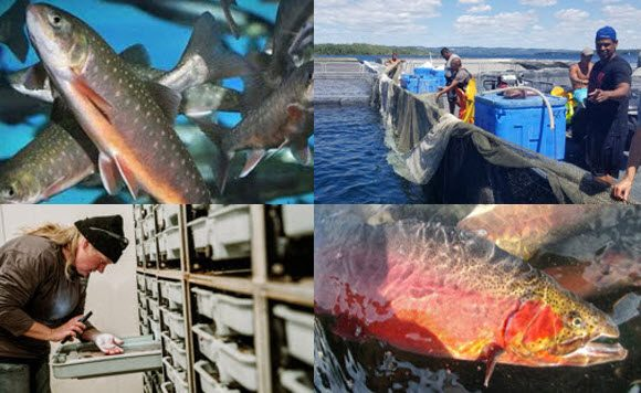 Canadian Freshwater Aquaculture Conference 2020
