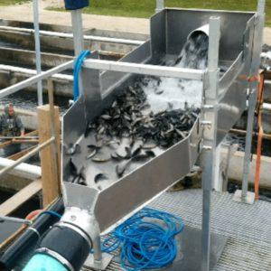 Covid-safe Technology Focus: Fish pumps