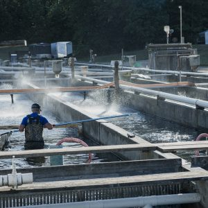 Ontario Aquaculture Association partners with OMAFRA to explore Covid-safe technology options for Ontario fish farmers